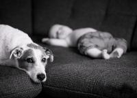 suesser Hund mit Baby.jpg