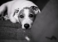 suesser Hund.jpg