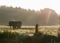 20151001_Herbstmorgen_DPO_1982.jpg