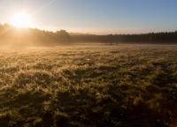 Morgenlicht auf dem Feld.jpg