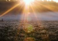 Morgensonne auf dem Feld.jpg