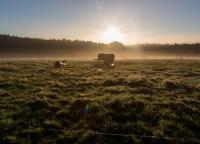 mystisches Licht am Morgen.jpg