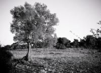 alte Baum.jpg