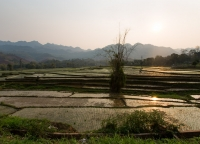 Reisefeld in Vietnam.jpg