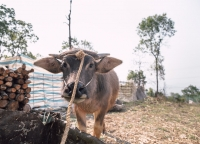 Landleben in Nordvietnam.jpg
