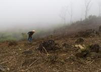Feldarbeit in Vietnam.jpg