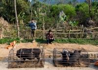 Schweineverkauf am Strassenrand.jpg