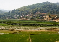 Panoramaaufnahme Reisfeld.jpg