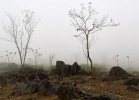 Nebel in Vietnam.jpg